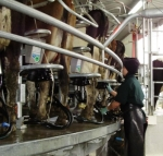 Dairy women's leadership programme a first