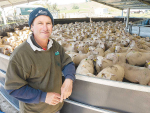 Dairy sheep farms set to boost stock numbers