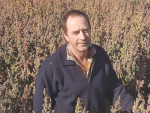 Andrew Currie in his red quinoa ready for harvest. Photo: Supplied.