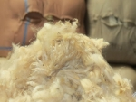 Wool market eases