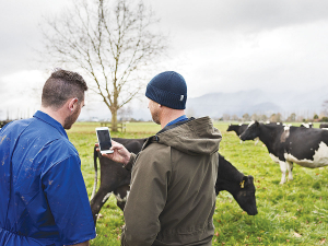 Go Dairy is a $3.5 million campaign being run by DairyNZ to try and get 1000 kiwis to fill dairy farm jobs.