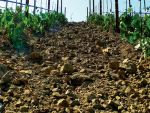 Minerality, a term to describe how the soil and rocks of the vineyard have been transported into the wine itself, may be an inaccurate phrase.