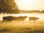 MPI says it is tightening the net on Mycoplasma bovis.