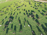 A drone photo shows how easy it is to capture images of pasture usage.