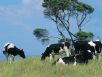 Dairy welfare code revamped