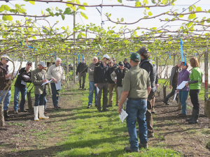 Kiwifruit Vine Health has trumpeted its collaborative approach with Government and industry as a winning formula.