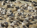 Wool market steady