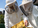 Supermarkets putting the squeeze on beekeepers