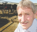 Cash-converter cows sorted in feed trial