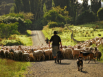 Sheep and beef levies will not rise this year.