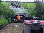 Temporary visa extension for dairy farm workers