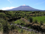 $5m Govt boost for Taranaki planting