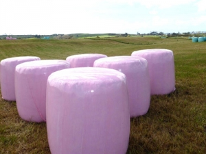 Pink and blue bales highlight cancers