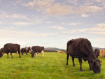 Stats NZ says the increase in total goods exports was due to an increase in the value of dairy products.
