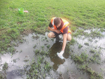 A Waikato Regional Council officer taking a sample of ponded effluent.