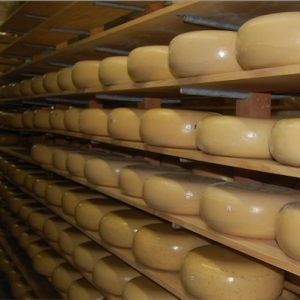 Prize-winning cheddar suits the more mature