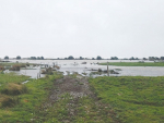 West Coast farmer Richard Reynold's flooded farm.