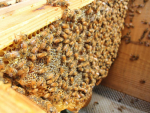 Beehive losses around the country last year were just 9.78%.
