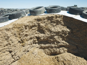 How good is your maize silage?