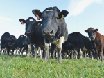 Mouldy feed threatens animal health