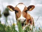 Review livestock valuation, improve tax efficiency.