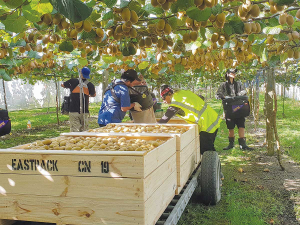 The aim of the new Kiwifruit Breeding Centre (KBC) JV is to bring the best kiwifruit cultivars to the market faster.