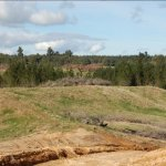 Forestry schemes under review