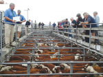Beef farmers with no trace of m.bovis are having stock sales contracts broken.