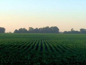 The PhotoSeed technology has direct applications in ryegrass, alfalfa and soybeans (pictured).