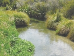 The Land and Water Forum (LAWF) is proposing time limits for farmers to fence waterways on their properties.