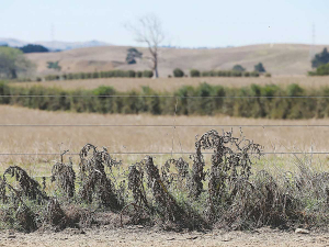 Northland is prone to drought.