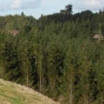 Fines for illegal forest harvesting