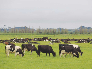 Fonterra has unveiled its plan for how much farmers will be paid for sustainable high quality milk.