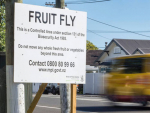 Second Queensland fruit fly detected
