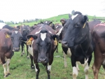 Dairy shed sensor firm eyes prize