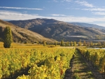 Stunning scenery and superb wines are attracting more tourists to Central Otago. Photo Mt Difficulty Wine Ltd, supplied by NZW.