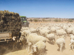 The Meat & Livestock Australia says sheep numbers will fall 3.5% this year.