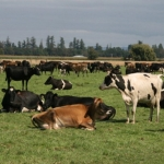 Funding boost for large herd trials