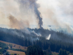 Tasman fires: Look after stock — MPI