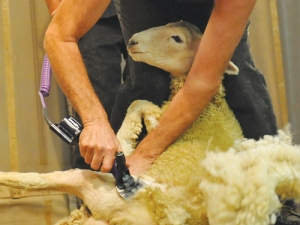 David Fagan knocked out a fleece in 24 seconds using the Handypiece-Pro.