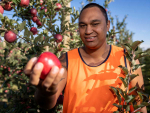 NZ's top young Māori growers