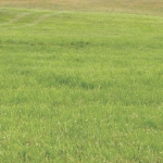 Fescue fits for Northland farms