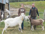 Dairy goat farmers Chrissy and Jonathan Carden-Holdstock with two of their champion animals, Clovenhoof Flavious, a Saanen buck, and Tamarvale Jaylee, a Toggenburg doe.