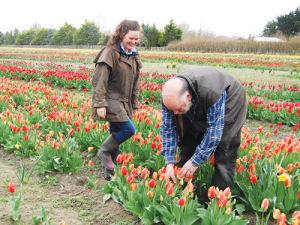 Father and daughter John and Courtney Chamberlain among the tulips on Hadstock Farm, Springston.