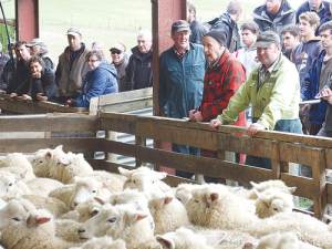 Progressive Livestock auctioneers run the surplus stock and plant auction at Telford following the takeover of the training operation by North Island-based Taratahi Agricultural Training Centre. A crowd estimated at close to 400, including 280 registered bidders, turned out for the auction.