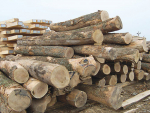 Forestry sector explores biofuels