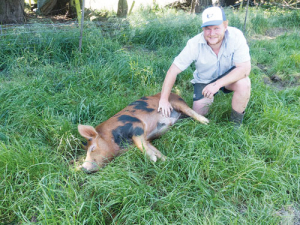 Darfield farmer James Davidson hopes Pablo Escoboar will help his Selwyn Swine Breeders Syndicate topple the Bhuja Boar Breeders at this year's Canterbury A&P Show.