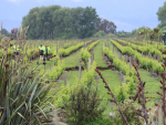 Five million litres of wine lost in Kaikoura earthquake