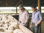 Resilience kept NZ agriculture strong through pandemic
