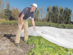 Dr Charles Merfield believes growing potatoes under mesh covers is the answer to many problems affecting the crop.